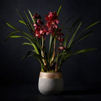 Fantasia Cymbidium Orchid Planter Purple