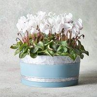 Vintage Cyclamen Garden Planter White