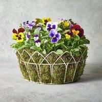 Vintage British Pansy & Viola Garden Planter Vibrant