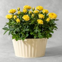 Yellow Rose Planter Yellow