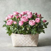 Large Rose Basket Pink