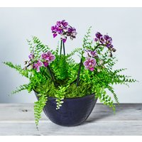 Double Twin Stem Orchid & Fern Planter Purple, lilac or blue