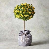 Pomponette Tree Yellow or orange