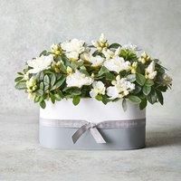 White Azalea Planter White