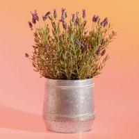 Lavender Garden Planter Purple, lilac or blue