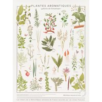 Treasures of the National Library Print - Herbs 60x80 cm