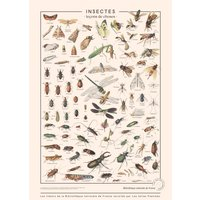 Insects Art Print 50x70cm