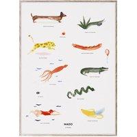 Animals Poster 50x70cm