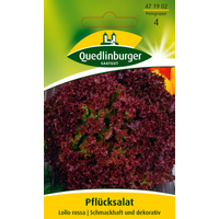 Quedlinburger Pfuecksalat 'Lollo rossa'
