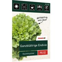 toom Ganzblättrige Endivie 'Escariol grüner'