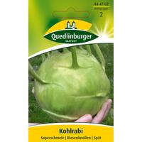 Quedlinburger Kohlrabi 'Superschmelz'