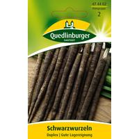 Quedlinburger Schwarzwurzel 'Duplex'
