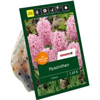 toom Hyazinthen rosa 3 Zwiebeln