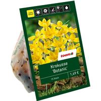 toom Botanische Krokusse gelb 15 Zwiebeln