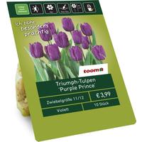 toom Triumph-Tulpen 'Purple Prince' violett 10 Zwiebeln