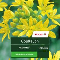 Goldlauch 'Allium Moly', 20 Stück, gelb
