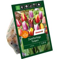 toom Zweifarbige Tulpen rot-gelb 6 Zwiebeln