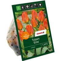 toom Tulpen 'Elite' orange 6 Zwiebeln