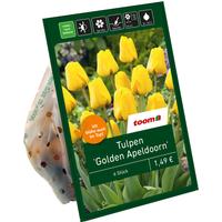 toom Tulpen 'Golden Apeldoorn' gelb 6 Zwiebeln