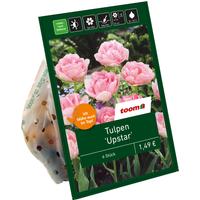 toom Gefüllte Tulpen rosa 6 Zwiebeln