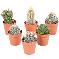 Let's get spiky up in here with a mix of 6 indoor cactus plants! - Plants Gifts