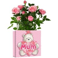 £9 instead of £29.99 for a rose plant in a Mother's Day gift bag from Flowers Delivery 4 U - save 70% - Bag Gifts