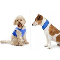 From £1.98 (from Pice Buster) for a Crufts pet cooling collar or vest - Underwear Gifts
