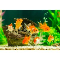 Image of £12 instead of £299 for an online Aquarium Set Up & Maintenance course from Contempo Learning - save 96%