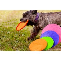 Image of Outdoor Dog Frisbee | Wowcher