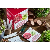 Succulents or Bonsai Acer Growing Kit   Wowcher