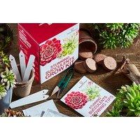 Succulents Or Bonsai Acer Growing Kit   Living Social