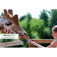£5 instead of £10 for a child's entry ticket with lemur and giraffe feeding, £8 for an adult ticket at South Lakes Safari Zoo, Cumbria - save up to 50% - Giraffe Gifts