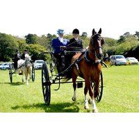 £29 to learn to drive a horse and carriage at Easter Hall Park for one hour from Buyagift! - Easter Gifts
