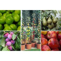 From £19 for a fruit tree collection - choose from two collections from PlantStore - save up to 68% - Fruit Gifts