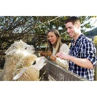 £6 for entry to The Llama Park for one adult and one child, or £10 for entry for two adults and two children - save up to 54% - Adult Gifts