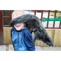 £55 for a one-hour binturong experience for two people at Hoo Farm Animal Kingdom, Telford from Buyagift! - Animal Gifts