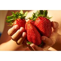 £12 instead of £19.99 (from Blooming Direct) for 12 'Sweet Colossus' strawberry plants - save 40% - Sweet Gifts