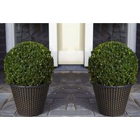 a pair of buxus topiary ball and gold planters from PlantStore  save 60%