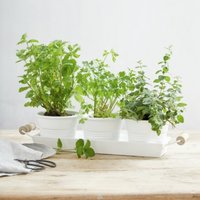 Enamel Herb Pots with Tray, White, One Size
