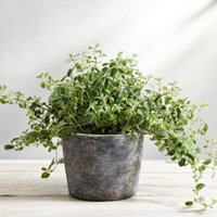 Earthenware Small Planter , Natural, One Size