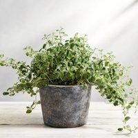 Earthenware Small Planter