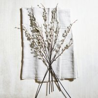 Pussy Willow Branches - Set of 5, Natural, One Size