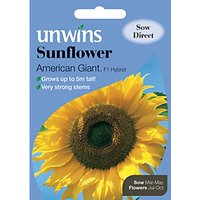 Unwins American Giant F1 Sunflower Seeds