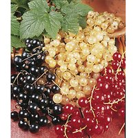Unwins Triple Currant Collection - Pack of 3