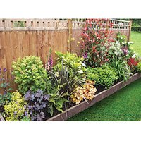 Garden on a Roll Mixed Shady Plant Border - 600mm x 10m