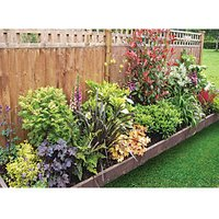 Garden on a Roll Mixed Shady Plant Border - 900mm x 9m
