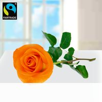 Orange langstielige Fairtrade Rose in edler Verpackung
