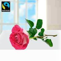 Rosa langstielige Fairtrade Rose in edler Verpackung