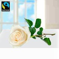 Weiße langstielige Fairtrade Rose in edler Verpackung