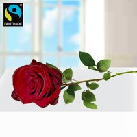 Rote langstielige Fairtrade Rose in edler Verpackung